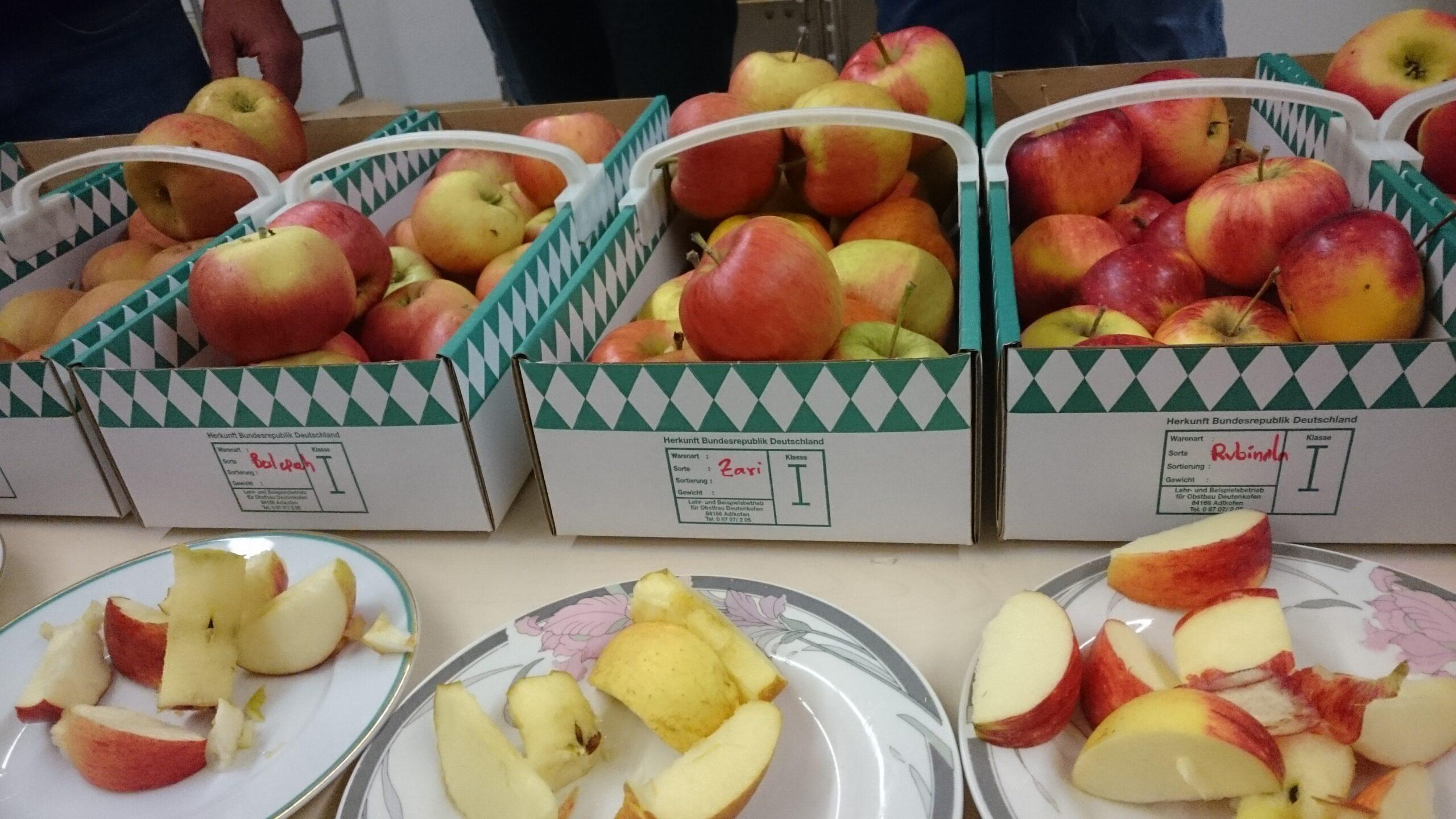 Sortenbestimmung Apfel